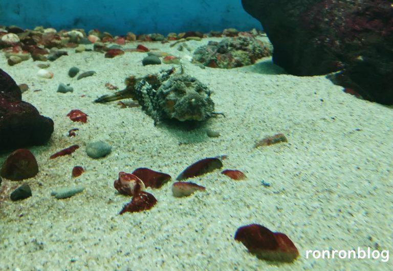 神戸市立須磨水族館のおすすめポイント